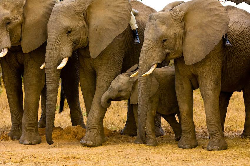 Somalia joins Africa-led initiative to protect elephants